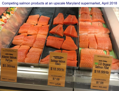 Berry and Knapp Present Trends in Atlantic and Bristol Bay Salmon Markets