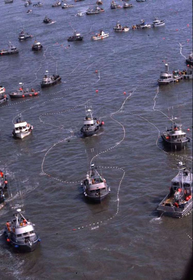 many fishing boats in Bristol Bay using lines to catch fish