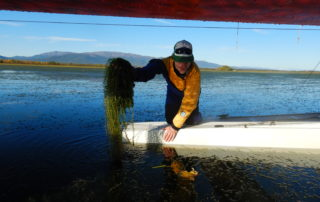 Tobias Schwoerer pulling Elodea out of the water while on a float plane