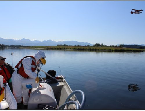 New research finds that elodea, Alaska's first aquatic invasive weed, will negatively affect the recreation experiences of Alaska's floatplane pilots