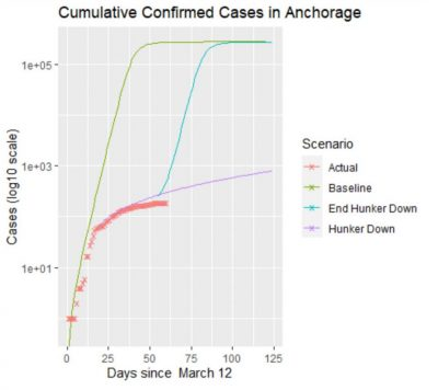 multi line graph showing projected scenarios of cumulative cases of COVID-19 in Anchorage, AK versus recorded, actual data